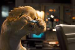 «Кошки против Собак: Месть Китти Галор» (Cats & Dogs: The Revenge of Kitty Galore)  Режиссер: [3467]  В ролях: [2180], [3469]