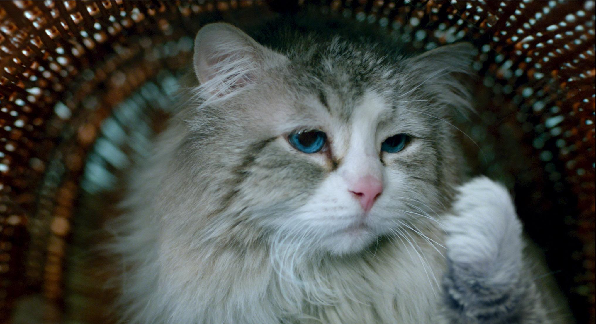 Картинка кот и девять жизней