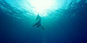 Она — океан