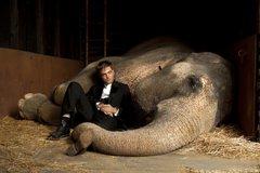«Вода для слонов» (Water for Elephants)  Режиссер: Фрэнсис Лоуренс В ролях: Роберт Таттинсон, Кристофер Вальц, Риз Уизерспун