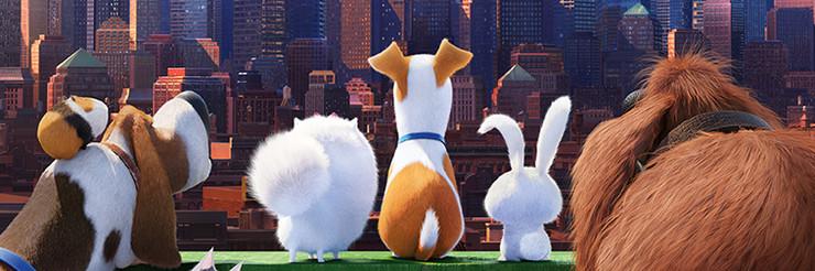 Постеры фильма «Тайная жизнь домашних животных»
